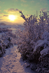 Twilight (quentinkent1) Tags: trees winter sun mountain snow france alps montagne alpes soleil twilight hiver traces arbres neige soir crpuscule vercors faz couch isere vgtation d90 18200vr