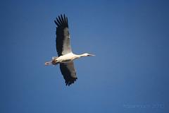Salto de fe (luisete!) Tags: blue sky naturaleza bird nature azul canon faith sigma ave cielo pajaro fe 70300 1000d frozentouch