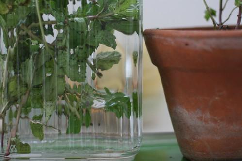Hortelã na água e vaso