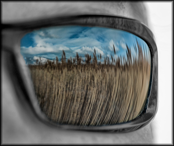 Reflected Phragmite Selective Color