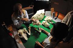 Tokyo 2009 - 上野 -  國立科學博物館 (3)