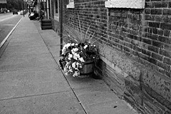 322_Market Street Sidewalk Flowers_2 (jannetie) Tags: trees blackandwhite cats newyork tractor art clock bicycle architecture contrast photoshop manipulated reflections golf ir 3d village furniture flag photoshopped bricks banner broadway victorian gourmet infrared trucks antiques storefronts ferns drugstore redhook golfcart retouching contrasts retouched houseplants dutchesscounty chromadepth gazingball porches gazingglobe fauxinfrared