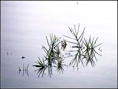 Reflections (Sandeep SK) Tags: travel india canon reflections photography earlymorning powershot s2is karnataka backwaters coorg otw harangidam somwarpet sunticoppa sandeepsk
