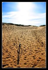 Tripod in the sand. Calblanque (Lifel-Mod) Tags: espaa canon eos spain best murcia 450 cartagena calblanque lifel 7idu5
