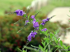 Tiny Beauty... (K. Shreesh) Tags: flowers india pune eos400d ef70200f4lis