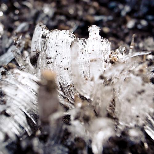 Ice Crystal Mushrooms 1