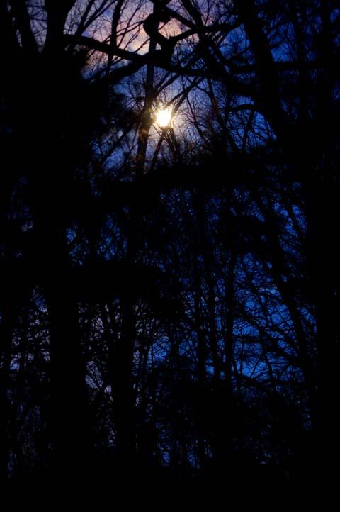 Moon Thru Trees