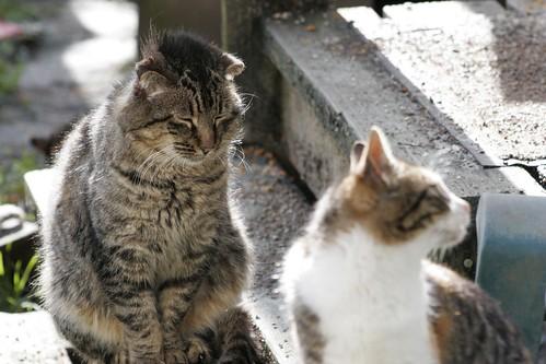 Punk Tom Cat Rests
