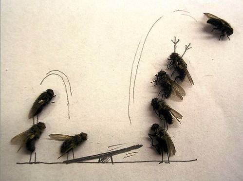 """bored at work - fun with dead flies"""
