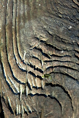 scrap wood (DaveCru) Tags: texture bark treepatterns canon40d