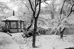 Fort Worth Texas Botanic Japanese Garden Snow Winter Flakes Storm Lake Tea House Arch Bridge Trees Pagoda DSC_1282 (Dallas Photo Today) Tags: bridge trees winter white house lake snow storm black garden japanese pagoda texas arch tea fort record botanic worth dfw snowfall flakes blizzard 2010