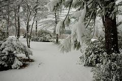 Snow-4923