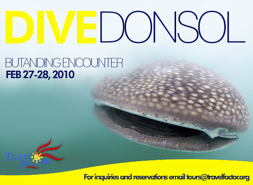 dive donsol whale shark adventure