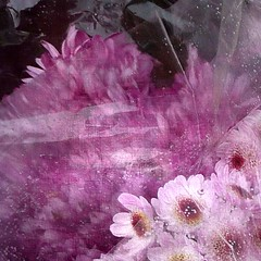 Manojo rosa (acativa) Tags: flores rosa texturas fantasticflower memoriesbook vanagram magicunicornverybest