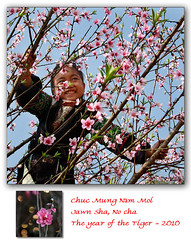chc mng nm mi (NaPix -- (Time out)) Tags: flowers portrait tree child vietnam card greetings tet lunarnewyear sapa hmong mi nm mng chc napix jawnshanochainhmong theyearofthetiger hadu