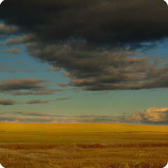Antiguo Mar de Campos (__Blanca__) Tags: cereal laguna campos palencia lanava fuentesdenava