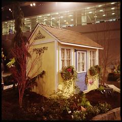 . (Ansel Olson) Tags: flowers trees windows plants 120 6x6 mamiya tlr film mediumformat garden lights virginia mac fuji interior cottage center richmond convention pro conference folly c330 homeandgardenshow c330s 800z mamiyasekor55mmf45