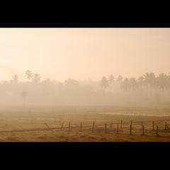 Good morning Bangalore! (sash/ slash) Tags: morning travel trees india mist field fog shoot paddy coconut weekend bangalore sash goodmorning sajesh varathur