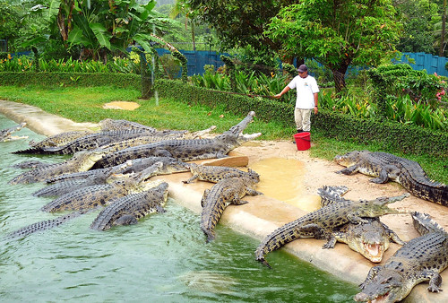Langkawi Crocodile farm32