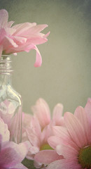 ~ The daisy's for simplicity and unaffected air. ~ (linda yvonne) Tags: pink flower petals quote simplicity daisy robertburns glassjar i500 tabletopphotography texturebyflorabella unaffectedair interestingnesss384