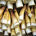 Bamboo Shoots - Northern Laos