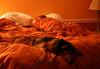 Flaming Jessi! 365 Days of My Dog, Day 50! (kathleenjacksonphotography) Tags: sunset dog pets love dogs fun florida ambience flamingjune dogphotography enjoylife catahoula petphotography dogportrait sunsetcolors louisianacatahoulaleoparddog catahoulamix platinumphoto leoparddog 365daysofmydog jessithewonderdog flamingjessi