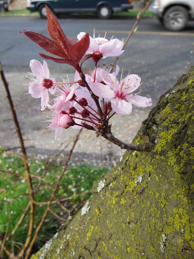 Mini plum branch
