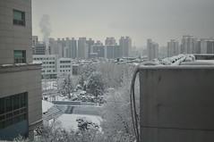 10-03-2010. Seoul, HUFS Campus. 8:50am