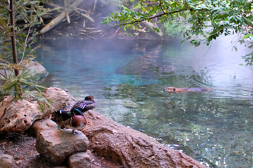 Ducks and beaver at the Biodome (2008)