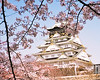 Osaka castle cherry blossom japan picture sakura canvas