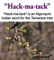 hackmatackname