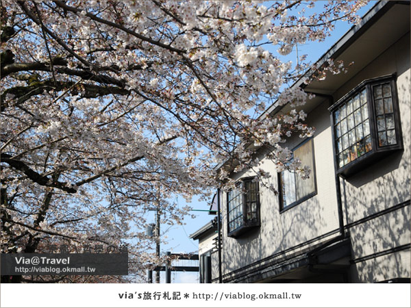 【via關西賞櫻行】京都賞櫻景點~哲學之道10