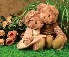 loving teddy bears (shenrys2009) Tags: loving teddy bears