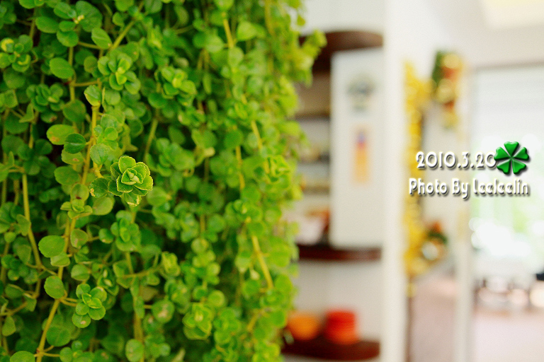 陽明山景觀餐廳] White House