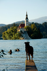 Dog waiting its owner in Bled (Mal80) Tags: dog lake game church animal d50 flickr shots group slovenia planet bled challenge outstanding the flickrchallengegroup flickrchallengewinner