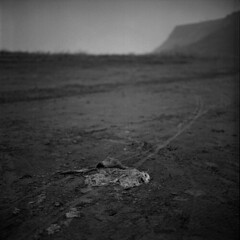 CAT ( Yanming ) Tags: china bw 120 film animal rolleiflex cat dead corpse yanming