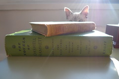 day 231: a photograph of books