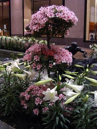 Azaleas & Lilies