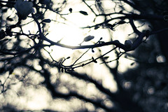 Black and White Sun (vasilly60) Tags: blackandwhite bw flower church nature easter 50mm random bokeh nikond90 ittybittyactions bokehwhore pioneerwomanactions
