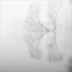 * (inc0mmunicado) Tags: longexposure bw tree 120 6x6 nature mediumformat square landscape photography belarus hassy yurimatte