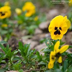 Yalta_spring_15
