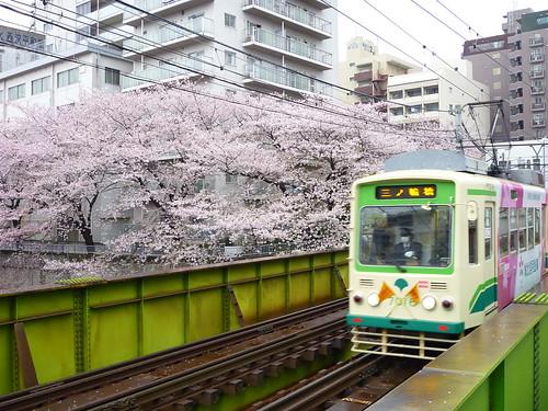 桜と荒川線
