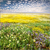 Color-a-SPLOSION!!! (Extra Medium) Tags: california flowers clouds spring bloom wildflowers centralvalley altocumulusclouds carrizoplainnationalmonument bloomingflowers carizzoplain watchthemichaelbaylinkitsworthit