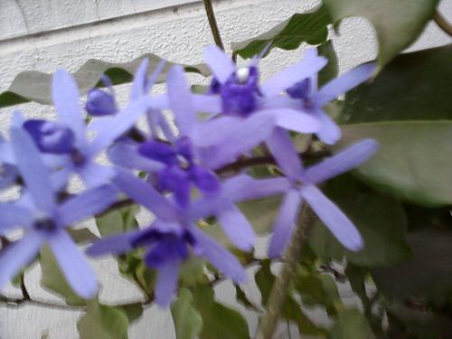 7. Krishnagaru flowers 2