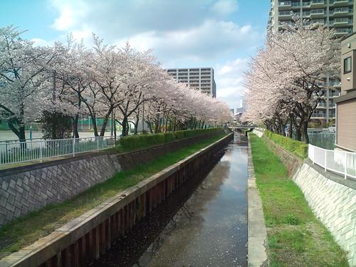 F-04Bで桜を撮影