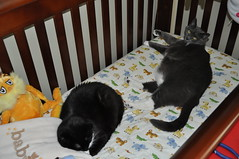 Breaking in the crib