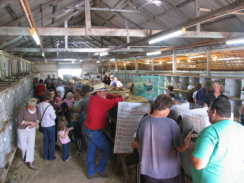 mudgee chook auction