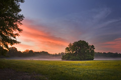Sunrise on a cool spring morning (clay.wells) Tags: road county cloud mist tree field yellow fog sunrise canon river photography eos interesting farm clayton wells farmland explore pasture april arkansas usm wildflower saline ef 1740mm 2010 landscpe bigmomma f4l 40d img0775 thechallengefactory