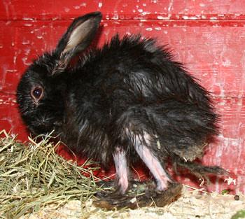 Et barn skal aldri være aleine om ansvaret for et dyr, uansett!
