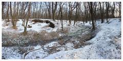 151 (AnkhaiStenn) Tags: wood winter snow tree green grass forest river stream russia ukraine russian ukrainian thunder ussr rovenki